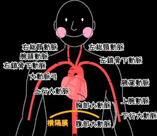 分岐 冠状 動脈